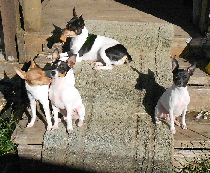 Sunning on the end of deck with Macci, Zoey, and Zara